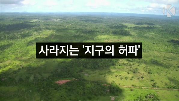 [라인뉴스] 지난해 사라진 아마존 열대우림 면적 '서울시 13배'