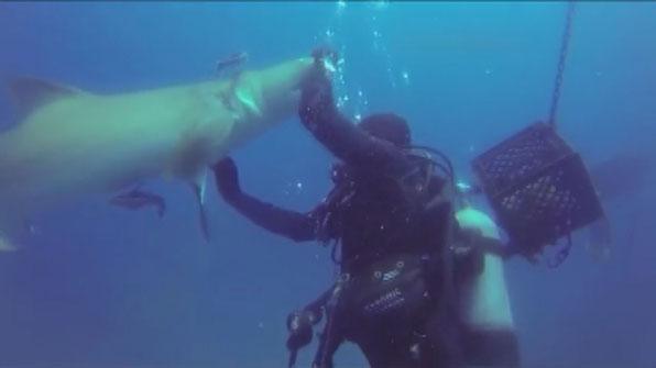 """""""도와주세요!""""…제 발로 잠수부를 찾아온 상어"""
