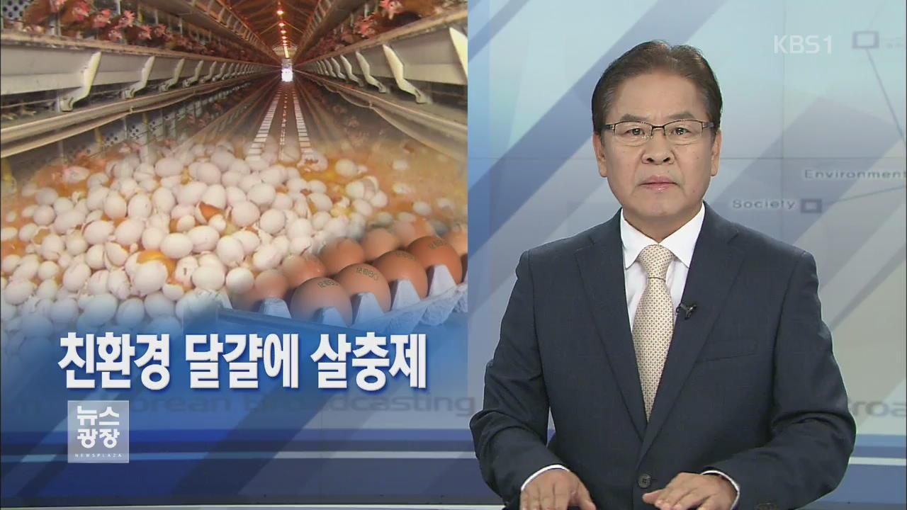 [뉴스해설] 친환경 달걀에 살충제 관련 사진