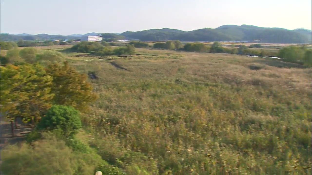 [Korea Snapshot] Ansan Reed Marsh Park