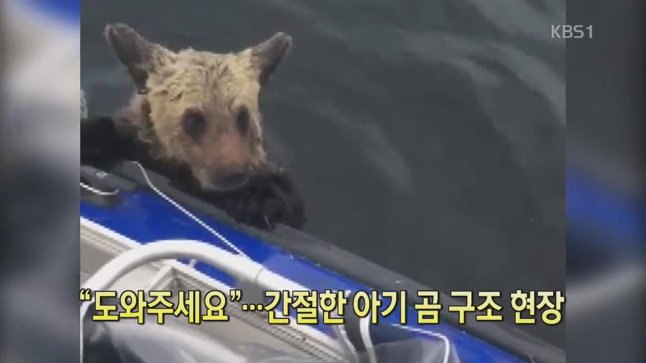 """[디지털 광장] """"도와주세요""""…간절한 아기 곰 구조 현장"""