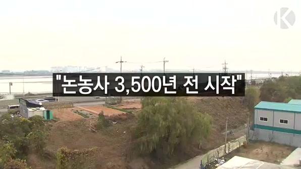"""[라인뉴스] 김포서 쌀 꽃가루 화석 검출…""""논농사 3500년 전 시작"""""""