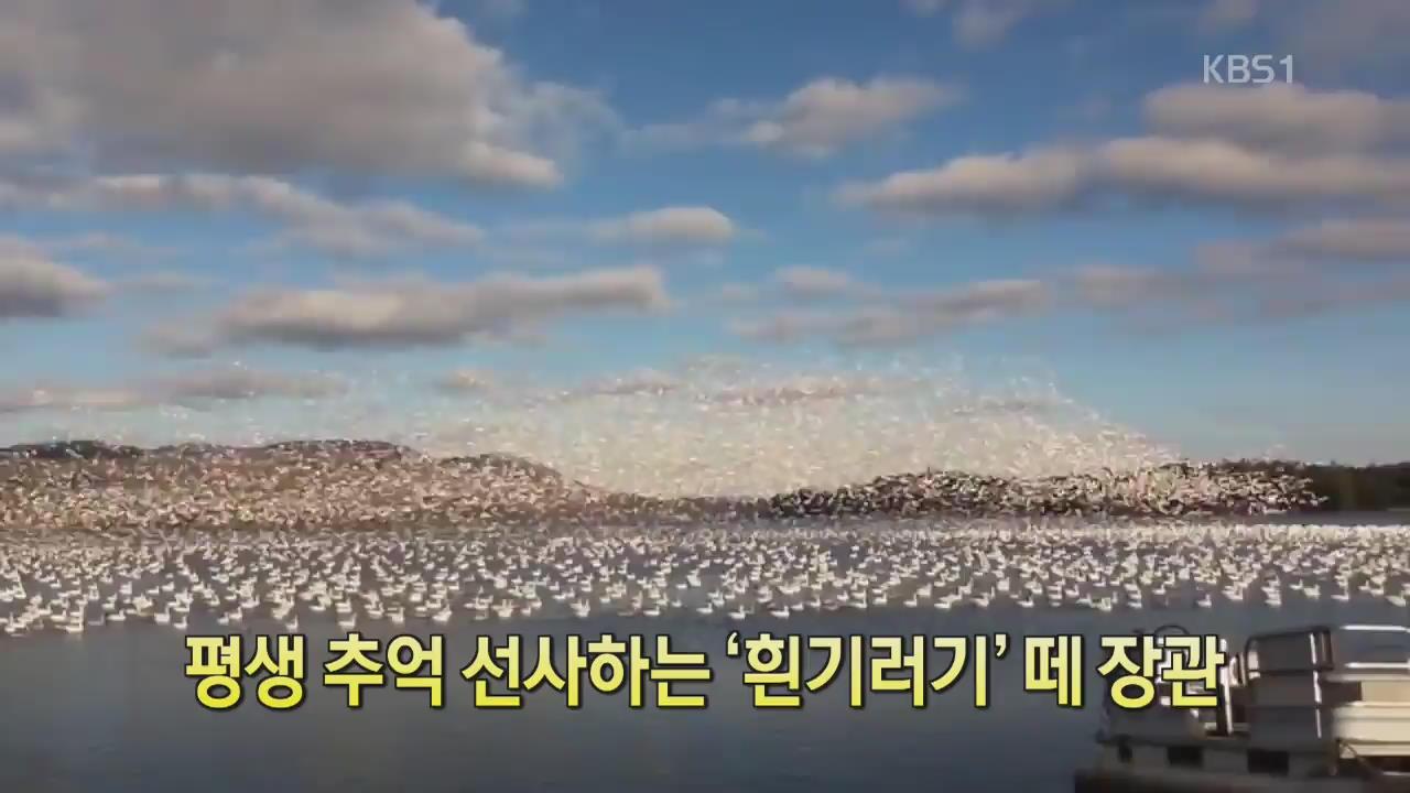[디지털 광장] 평생 추억 선사하는 '흰기러기' 떼 장관