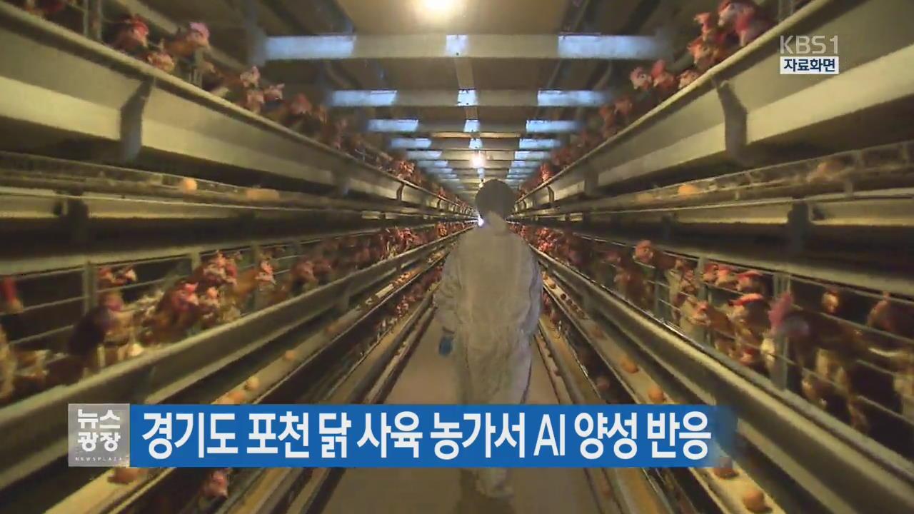 경기도 포천 닭 사육농가서 AI 양성 반응