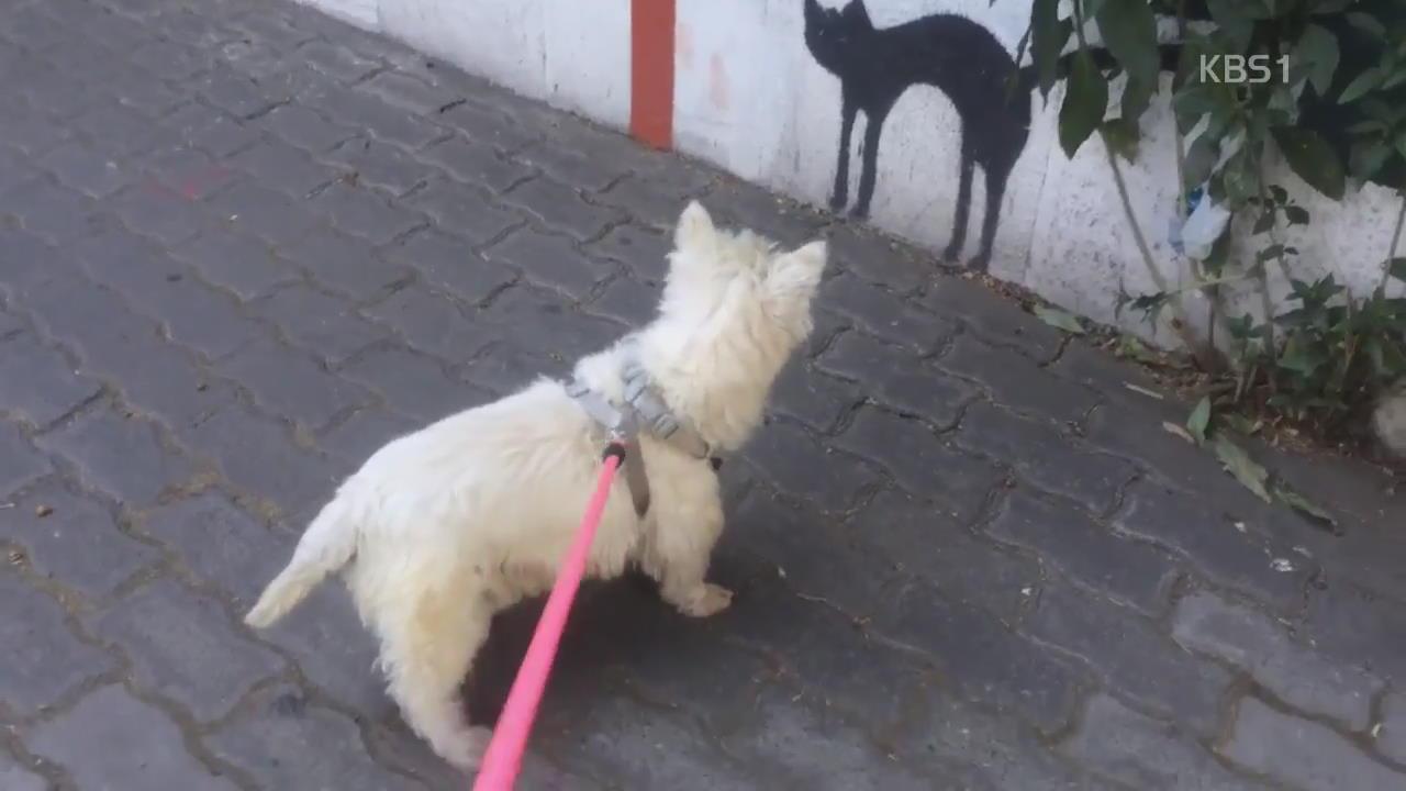 [디지털 광장] '강아지'와 '고양이 벽화'의 팽팽한 눈싸움