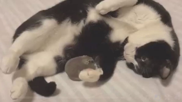 [고봉순] 고양이랑 쥐도 친하게 지낼 수 있을까?
