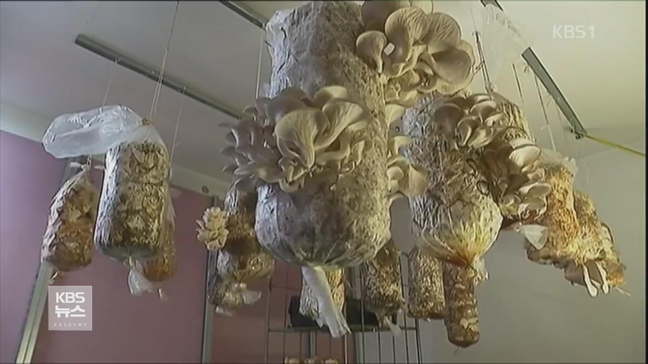佛 보르도 지하 주차장서 느타리버섯 재배 관련 사진