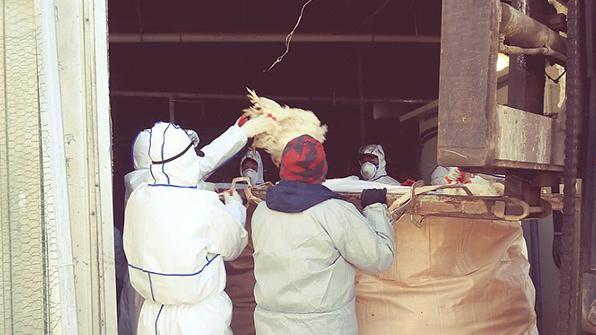 중국서 세계 첫 'H7N4형 조류인플루엔자' 감염자 발생