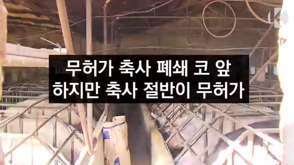 [라인뉴스] '무허가 축사' 폐쇄 코 앞인데…축사 절반이 무허가