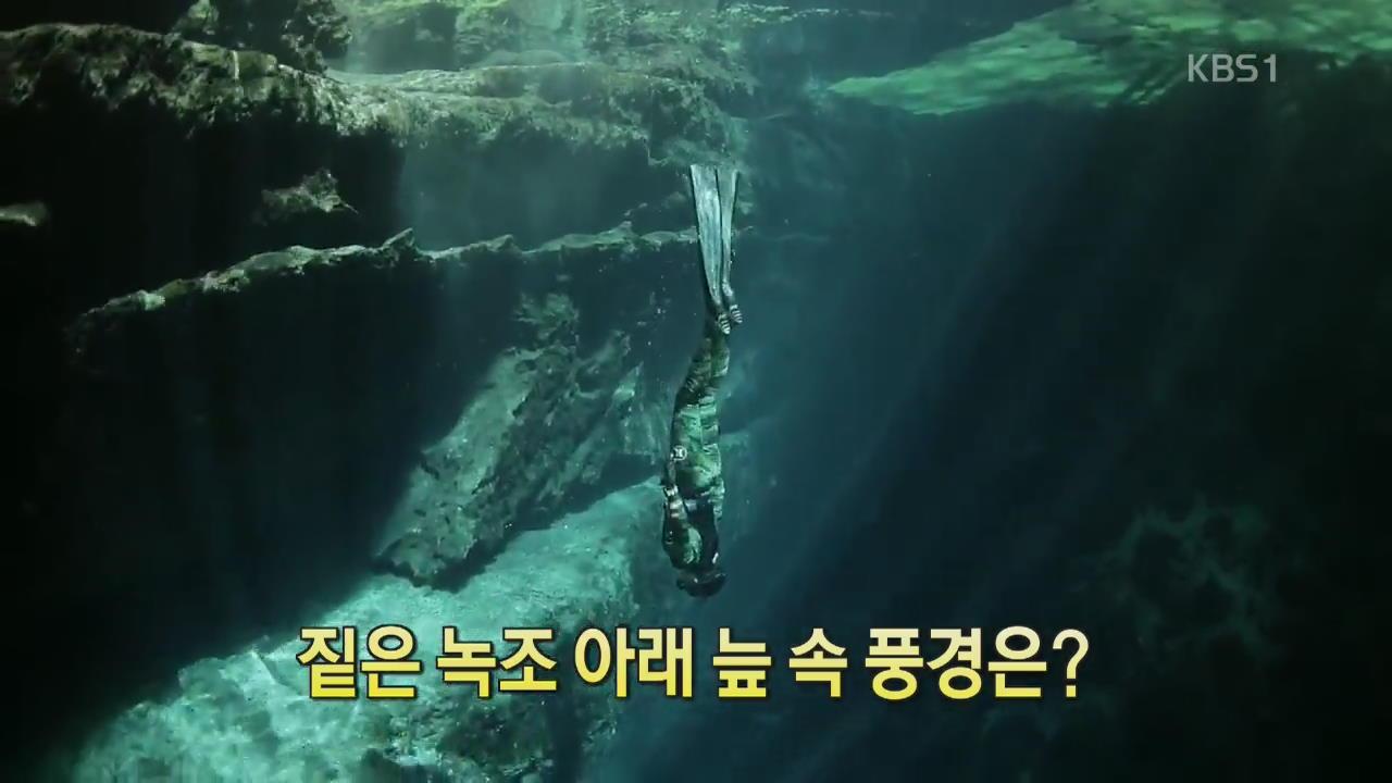 [디지털 광장] 짙은 녹조 아래 늪 속 풍경은?