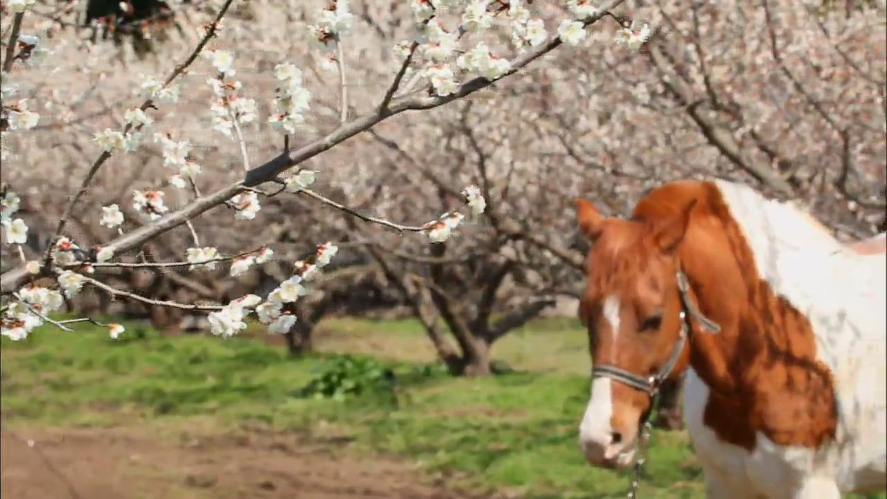 [Korea Snapshot] Spring Sights