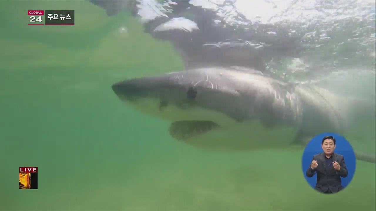 [글로벌24 주요뉴스] 호주 서부 해안서 상어 공격으로 두 명 부상