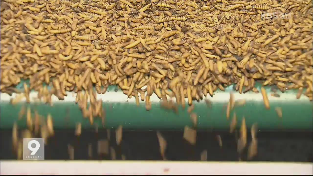 처치곤란 '음식물 쓰레기'…곤충 먹이로 해결