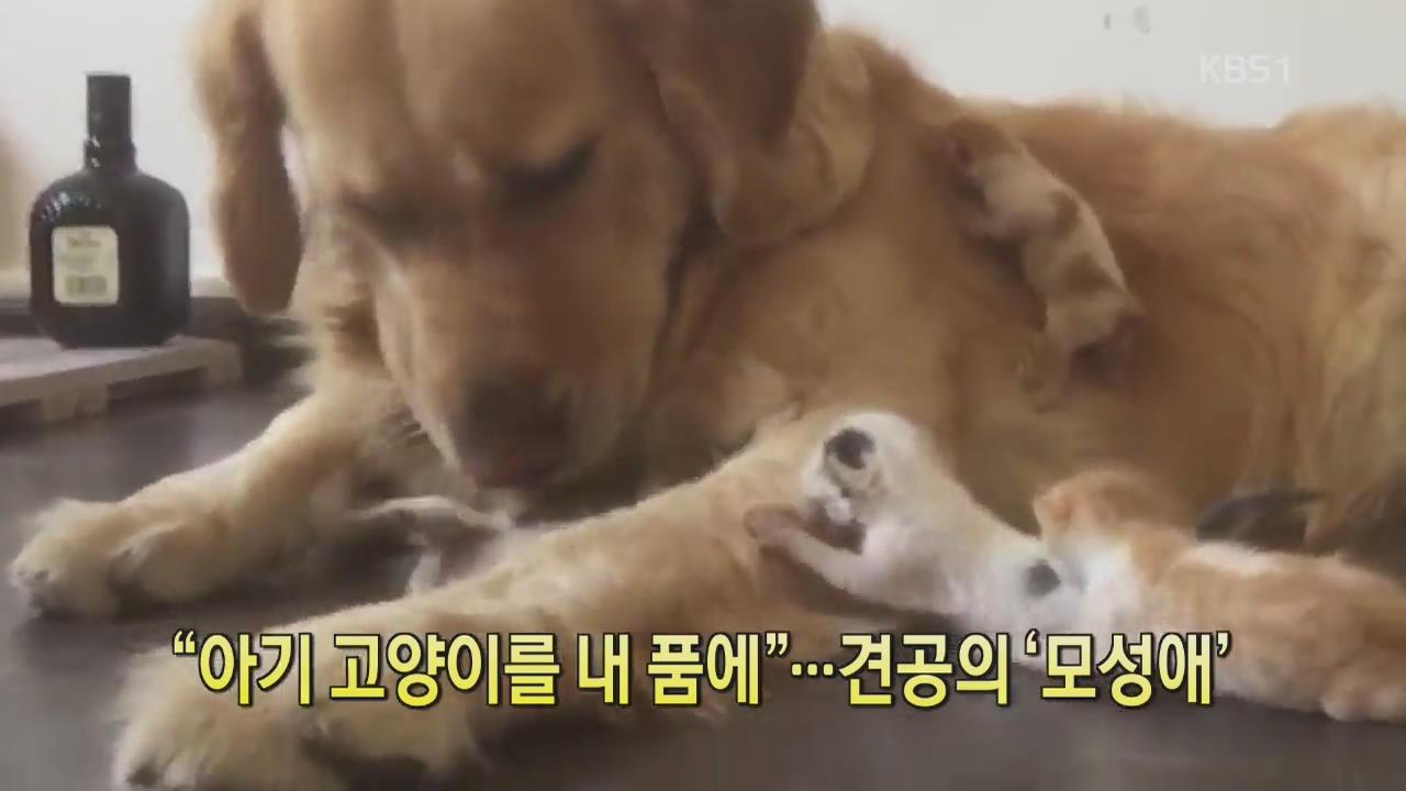 """[디지털 광장] """"아기 고양이를 내 품에""""…견공의 '모성애'"""
