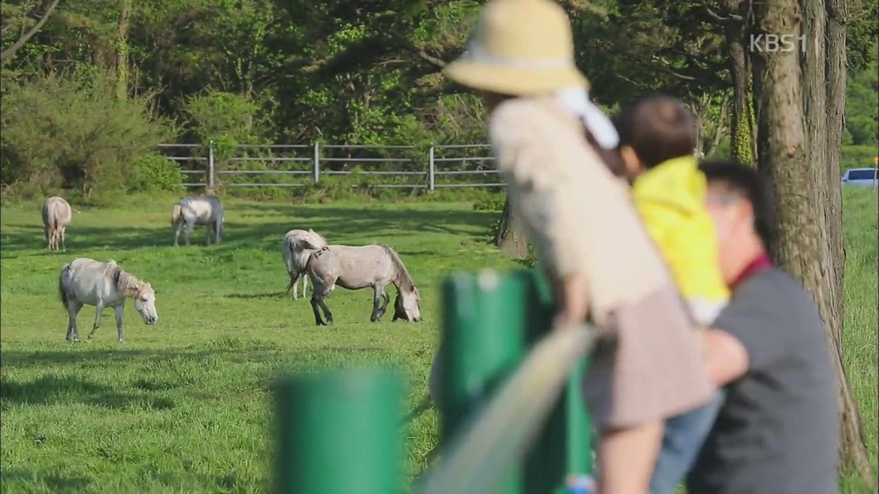 [뉴스광장 영상] 말들의 휴식