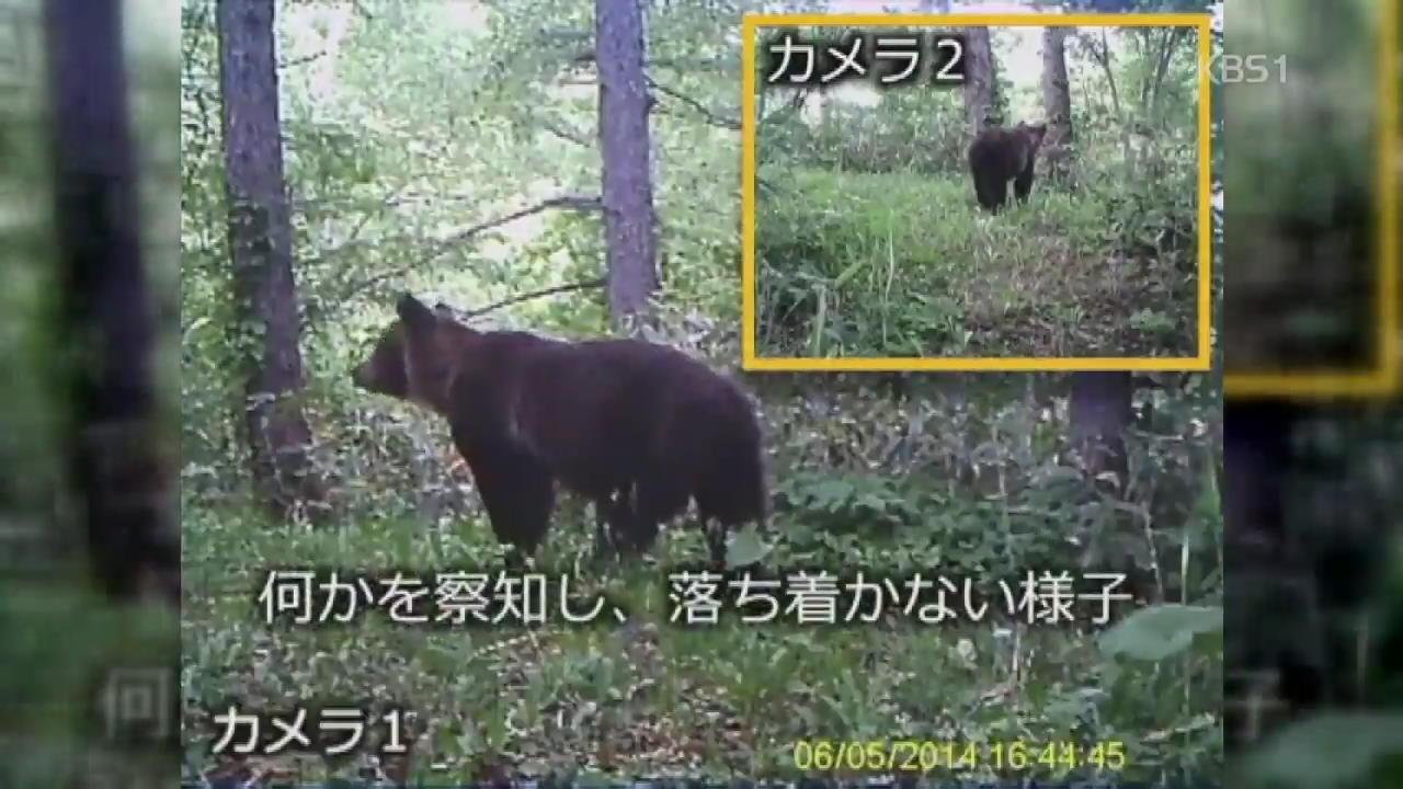 """'곰' 대국 일본 대처법…""""미리 소리 내세요"""""""