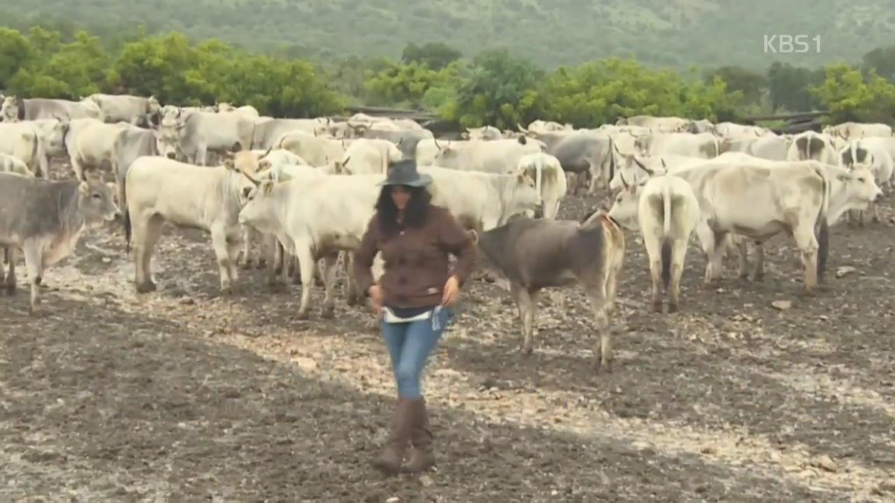 """이탈리아 """"젖소 목초지 이동 전통, 세계유산 검토"""""""