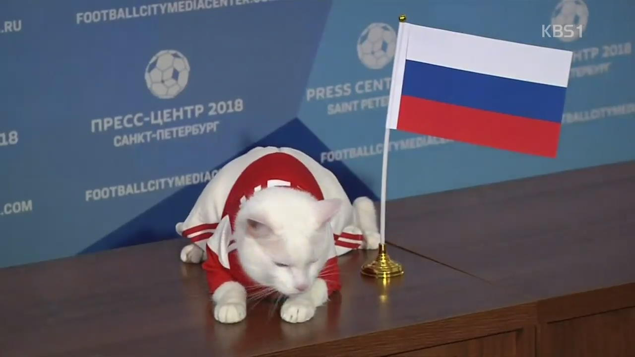 [오늘의 영상] 점쟁이 고양이, 러시아 vs 사우디 결과 예측!