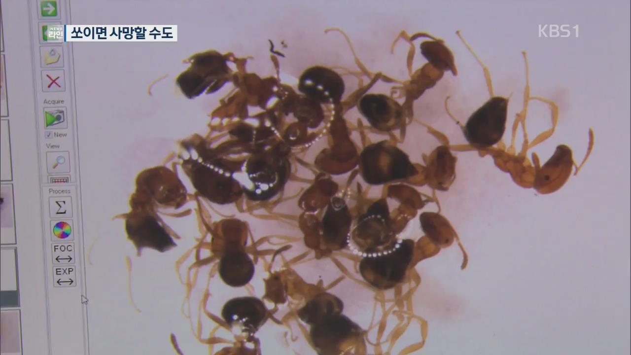 평택항서 붉은불개미 700여 마리 발견…방역 비상