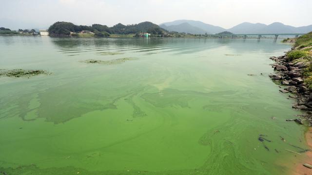 낙동강·대청호 상수원, '녹조' 경보…댐 방류 추진