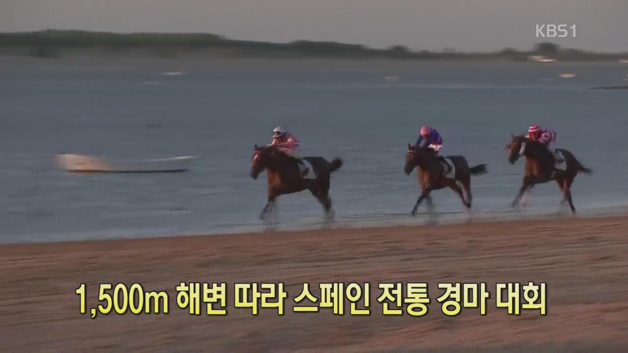 [디지털 광장] 1,500m 해변 따라 스페인 전통 경마 대회