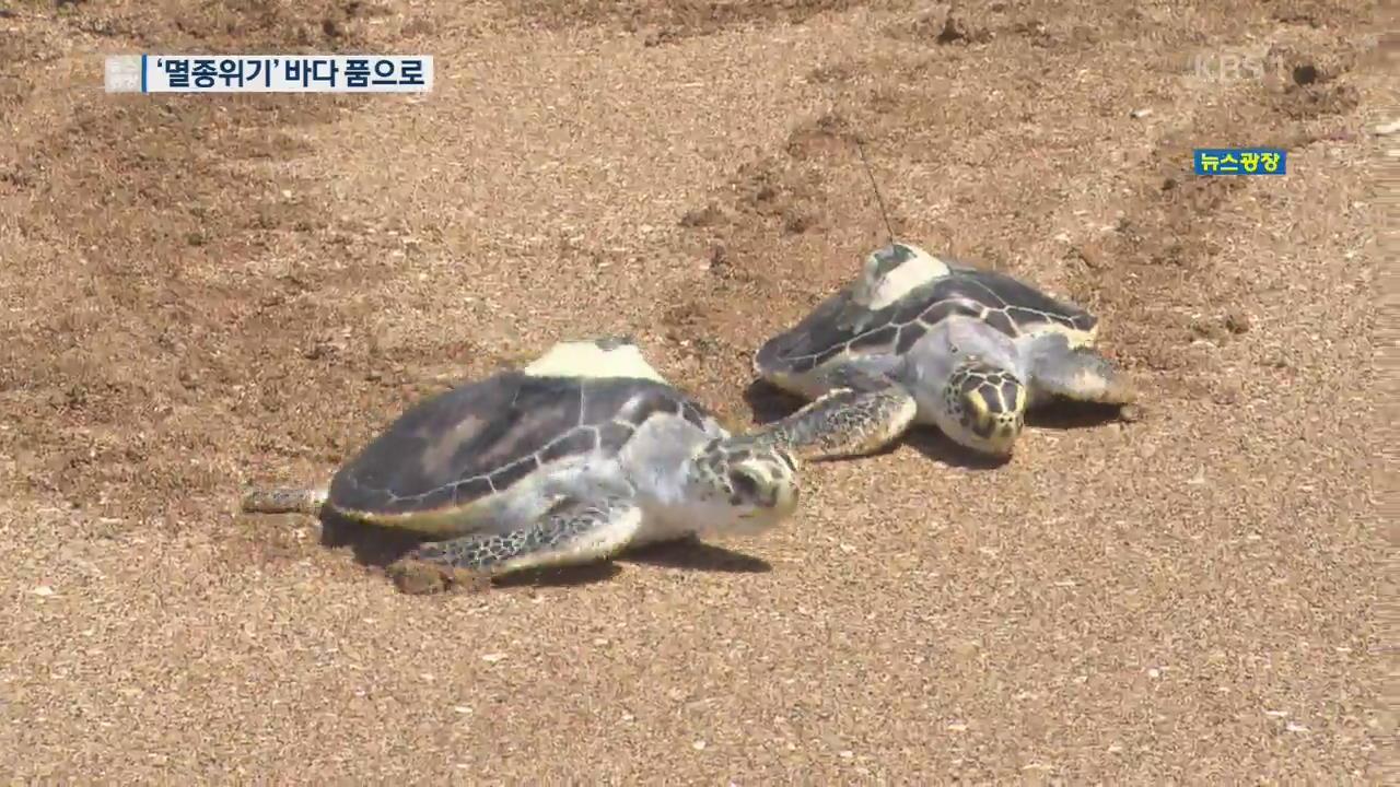 '멸종위기' 바다 거북, 제주 바다 품으로